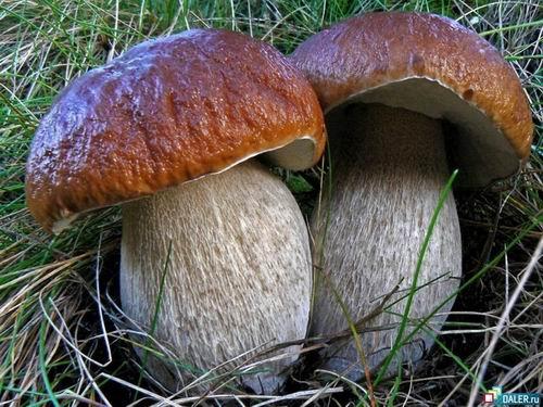 Какие мифы связаны с грибами?