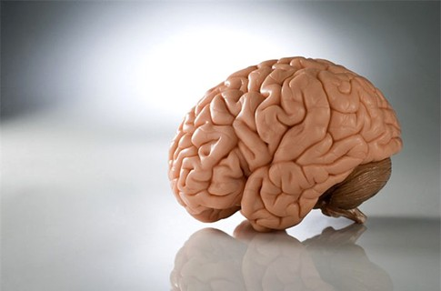 Человеческий мозг