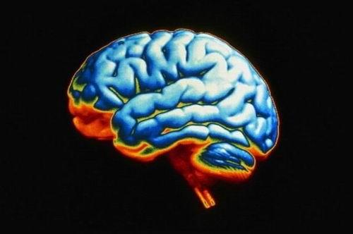 Ваш мозг. Советы по эксплуатации.