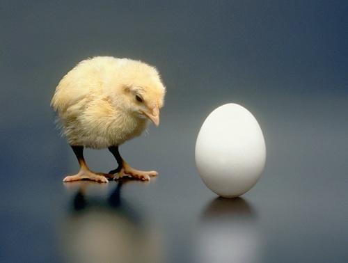 Британские учёные решили вопрос о яйце и курице
