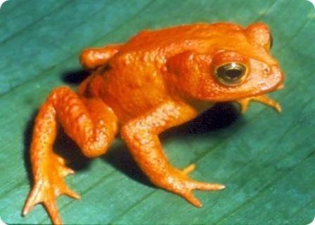 Вымершие животные,  Источник: http://www.realfacts.ru/index.php?newsid=348 © http://www.realfacts.ru 1297343585_5