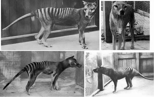 Видов животных вымерших за нашу жизнь