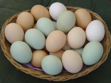 Интересное про яйца
