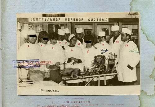 Секретно советский биоробот