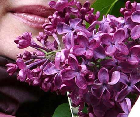 Факты и сведения о запахах