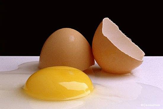 Куры с белыми ушными мочками откладывают белые яйца, а с красными мочками — коричневые