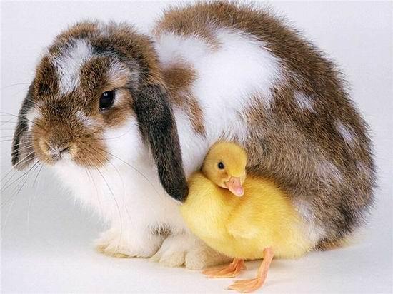 Странные факты о животных.