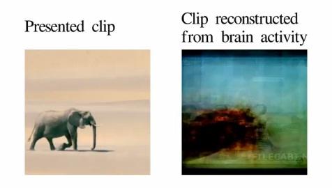 Учёные впервые извлекли кино из мыслей подопытных