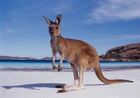 Необычные традиции на День Независимости в Австралии