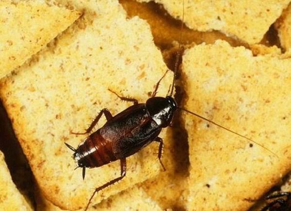 Чем полезны тараканы для нашей планеты?