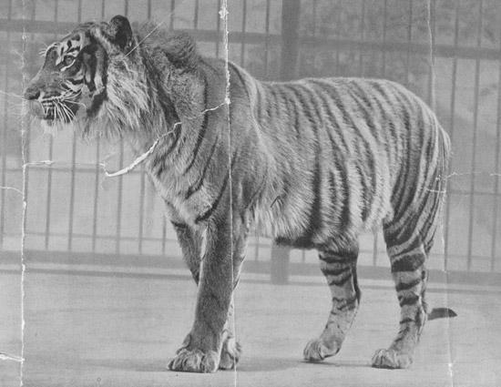 Вымершие животные,  Источник: http://www.realfacts.ru/index.php?newsid=348 © http://www.realfacts.ru 1341913064_7