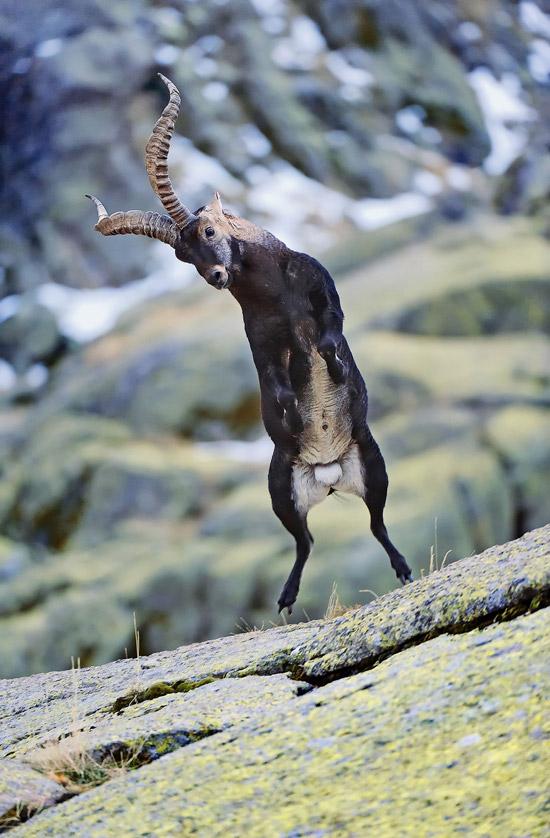 Вымершие животные,  Источник: http://www.realfacts.ru/index.php?newsid=348 © http://www.realfacts.ru 1341913105_8