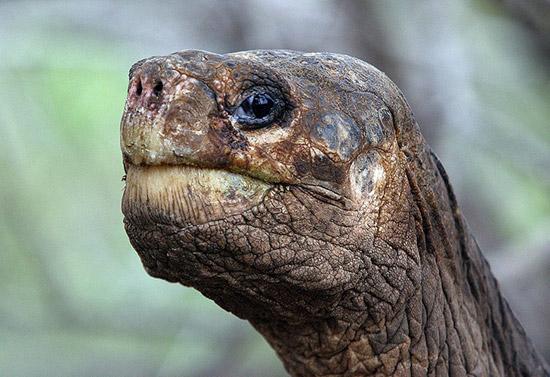 Вымершие животные,  Источник: http://www.realfacts.ru/index.php?newsid=348 © http://www.realfacts.ru 1341913123_1