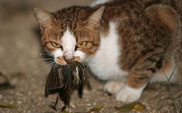 Особенности поведения кошек, у которых есть необычное объяснение