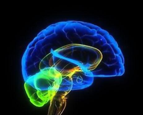 Мозг обладает способностью к самоочищению