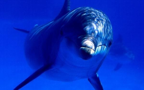9 существ, которые могут спасти вашу жизнь