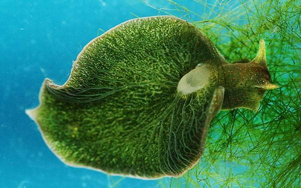 Странные животные с повадками растений