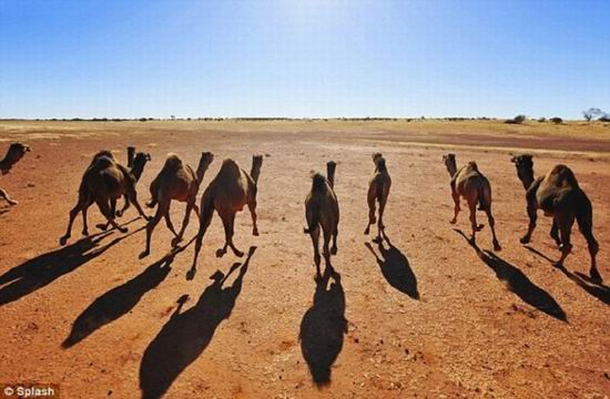 10 видов животных, которых можно встретить в неожиданных местах