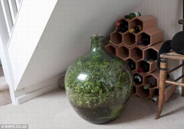 Экосистема, которая уже сорок лет развивается в закупоренной бутылке