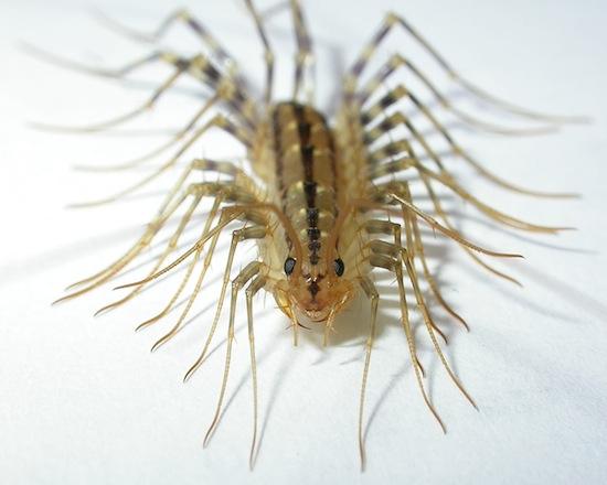 воздействие паразитов организм человека
