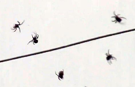 На Бразилию «пролился» дождь из пауков (фото, видео)