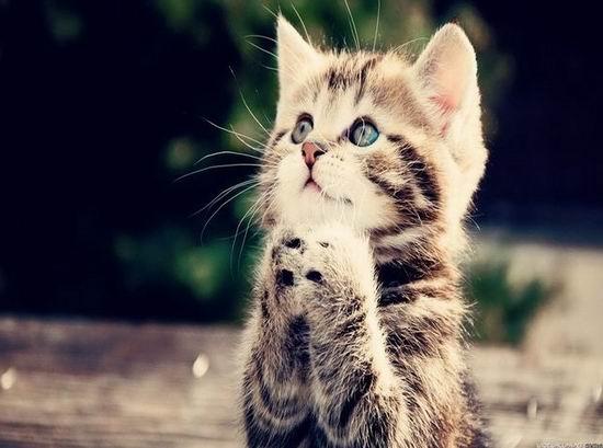 почему котов парализует