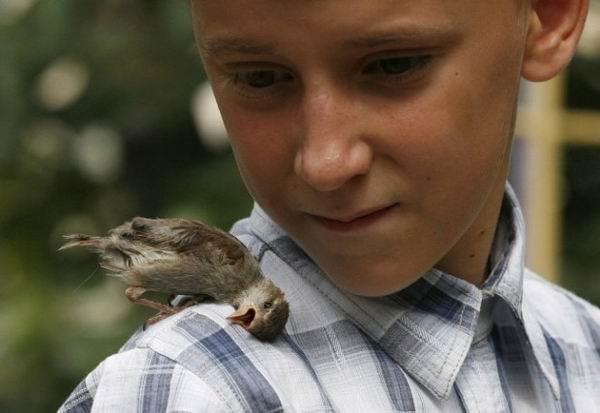 Милосердное отношение людей к животным 1378199726_1