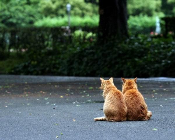 9 малоизвестных фактов о кошках