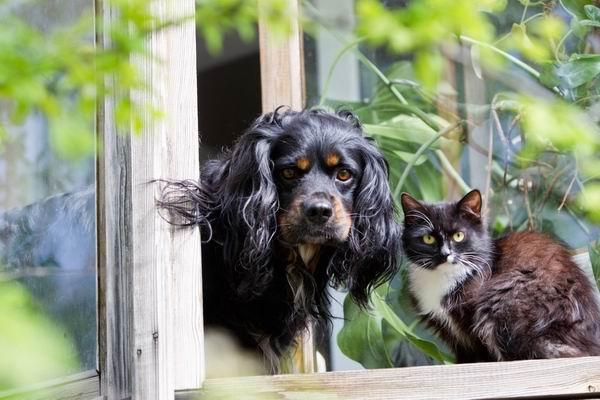 7 способов, которыми домашние животные-компаньоны улучшают жизнь