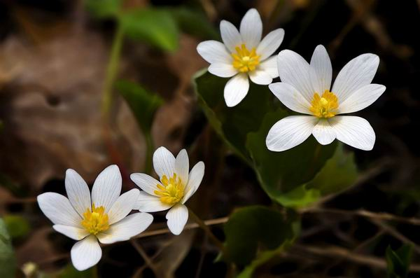 Цветы, которые могут навредить вашему здоровью