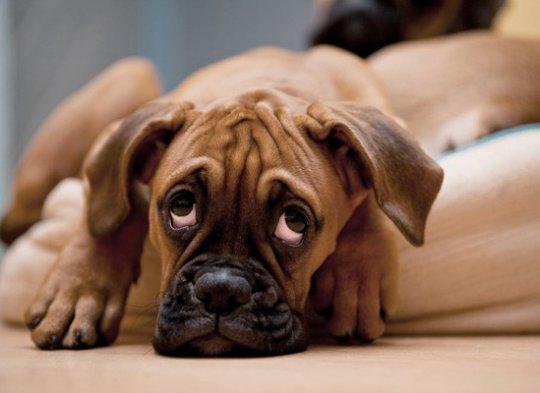 10 смертельных заболеваний, которые мы подхватили от животных