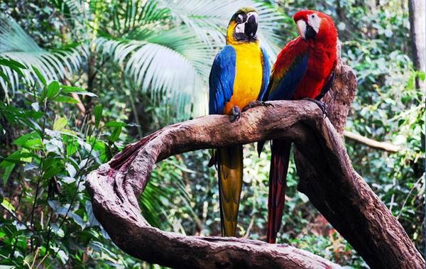 Интересные факты о тропических лесах Амазонки