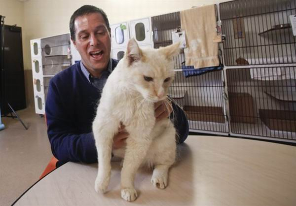 Как кошки общаются с нами с помощью мяуканья, моргания и усов