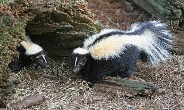 Странные, но эффективные механизмы защиты диких животных